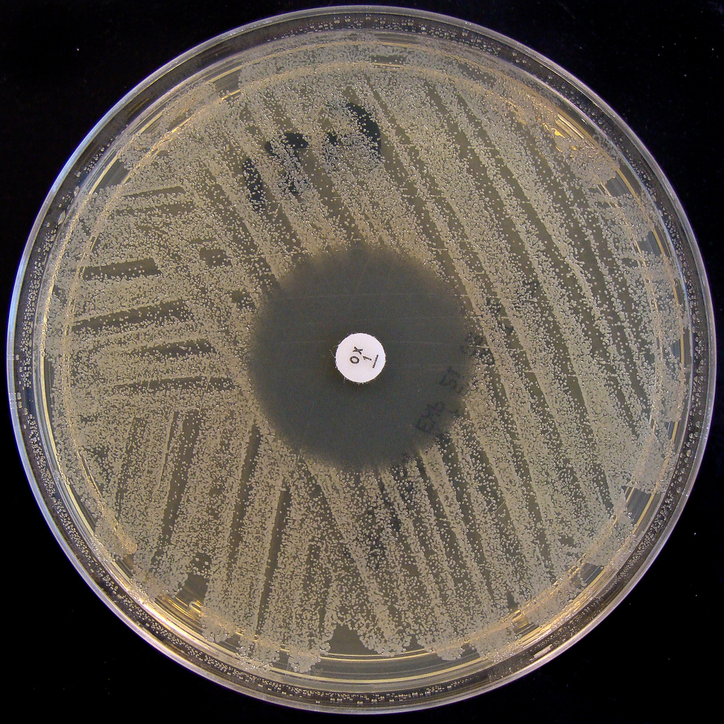 How Has Mrsa Evolved Through Natural Selection