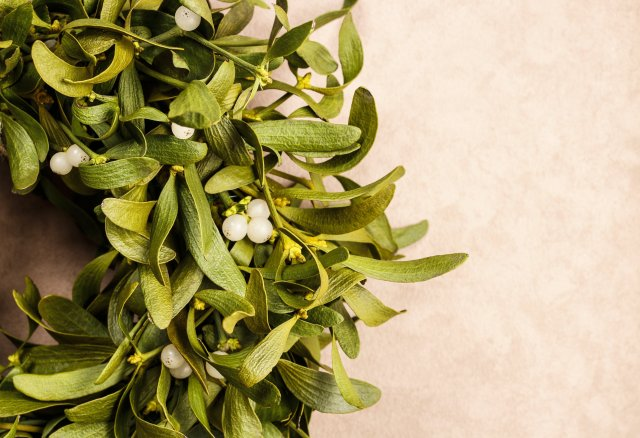 Mistletoe - great for making single people feel unloved at Christmas.