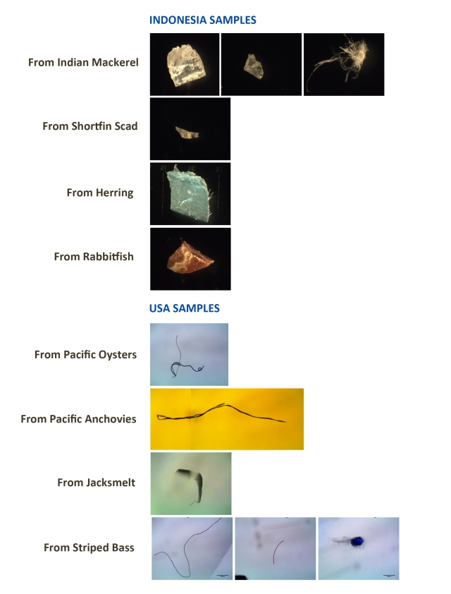 types of debris